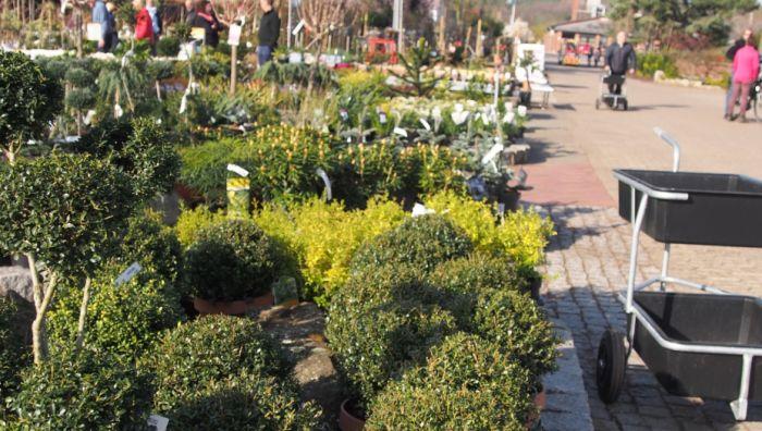 Artmeyer Gartenbaumschule