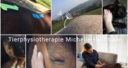 Tierphysiotherapie Michelle Hoffmann