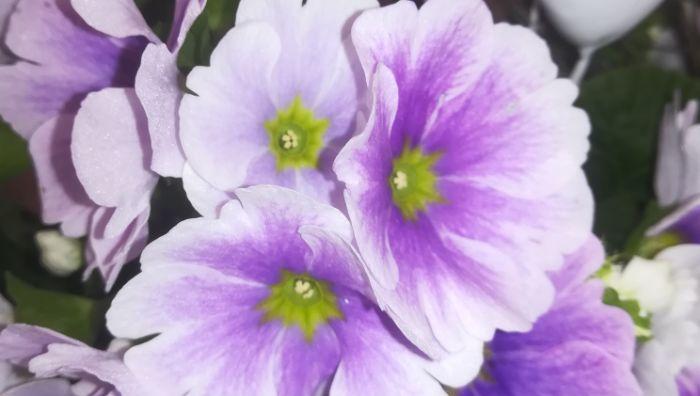 La Fleur Floristikfachgeschäft
