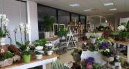 Gabis Blumen-und Dekoecke (im Rewe-Markt)