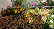 Blumen - Gartencenter Denecke