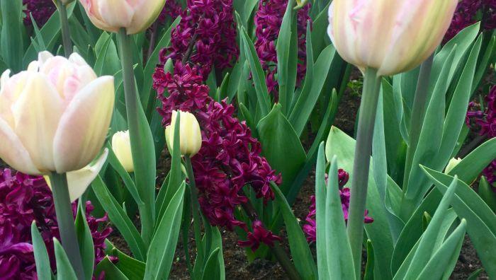 Blumen Blubacher