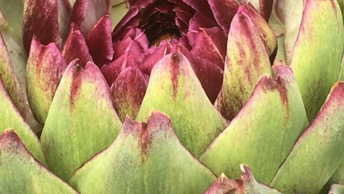 Blumen-Schillinger