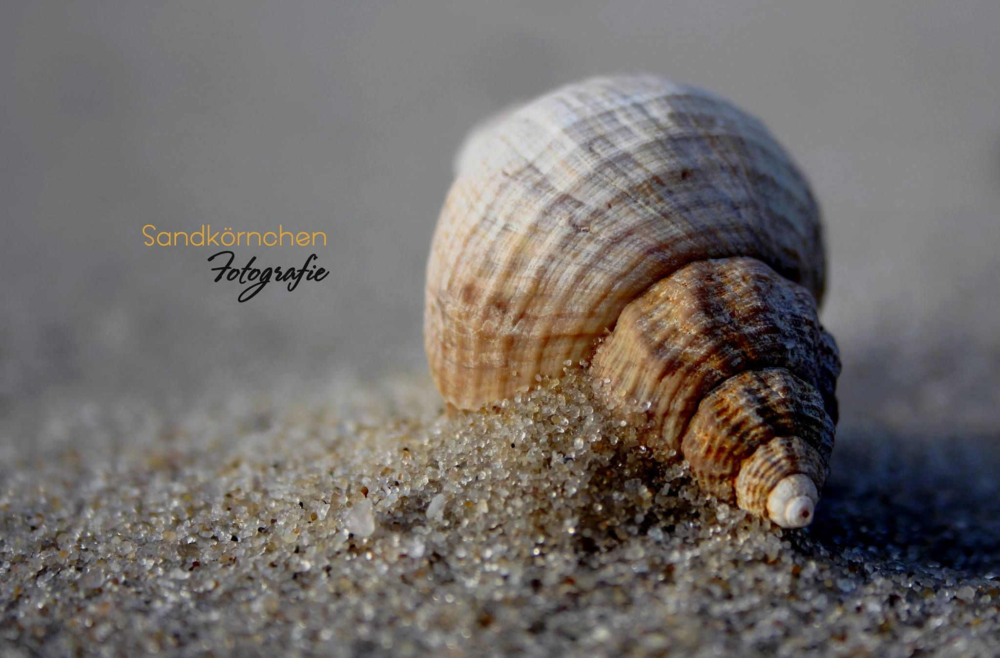 Sandkörnchen Fotografie
