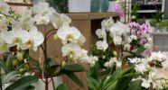 Blumenmanufaktur Kannenberg