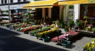 Blumen Westphal